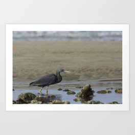 Eastern (Pacific) Reef Egret Art Print