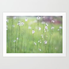 Midsummer Dream Art Print