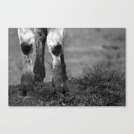 Stomping Ground Canvas Print