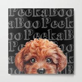 Peek A Boo, Toy poodle, redish brown tone Metal Print