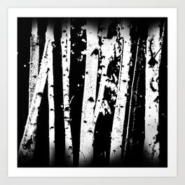 Black and White Birch Trees Fade Out Art Print