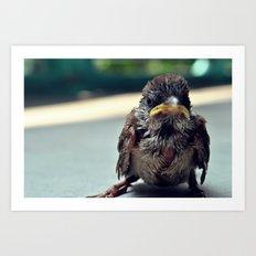Poor Birdy Art Print