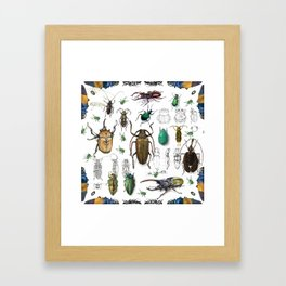 Beautiful Beetles Framed Art Print