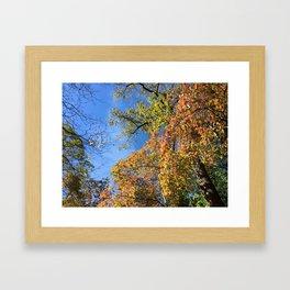 Changing Leaves at Biltmore Framed Art Print