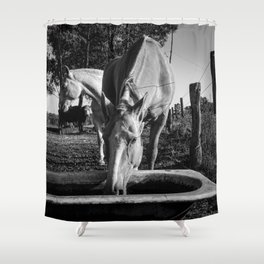 Pampa's Horse Drinking Water Shower Curtain