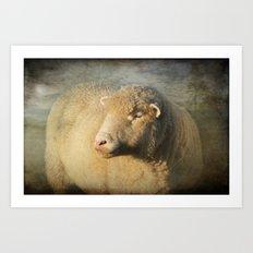 Merino sheep Art Print