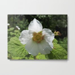 Thimble berry flower Metal Print