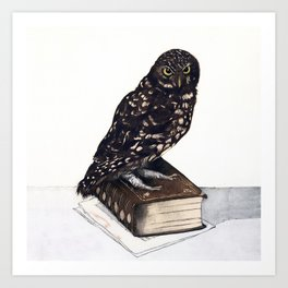 Reading with Owl Art Print