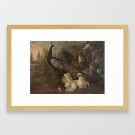 Melchior de Hondecoeter (1636-1695) A peacock, hens, turkey, and a cockerel, before an Italianate la Framed Art Print