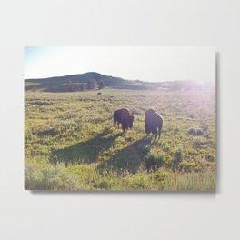 Wild Buffalo Metal Print