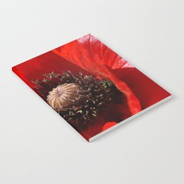 Sunlit Poppy Notebook