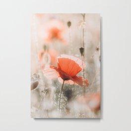 Red Poppy In Sunlight Photo   Flower Photography   Soft Light Red Poppy Metal Print