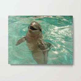 Laughing Dolphin Metal Print
