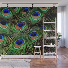 Beautiful photograph of peacock feathers Wall Mural
