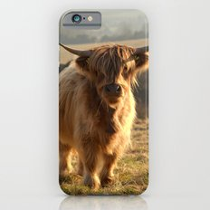 Young Highland Cow Slim Case iPhone 6s