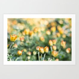 Yellow Flowers at Fall Domes Show Art Print
