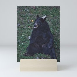 North Carolina Black Bear Mini Art Print