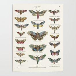 Vintage Moth Chart Poster