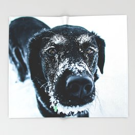 Snow Dog // Cross Country Skiing Black and White Animal Photography Winter Puppy Ice Fur Throw Blanket
