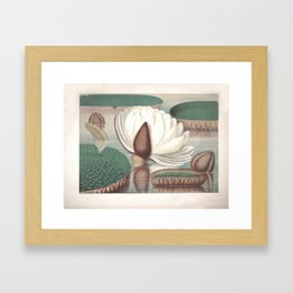 Amazon Water Lily Framed Art Print
