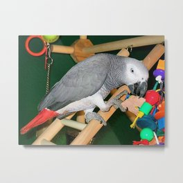 Doobie the parrot Metal Print