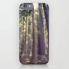 Redwoods Hike iPhone 6s Slim Case