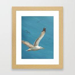 Seagulls in Flight Framed Art Print