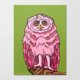 Outstanding Owlet Canvas Print