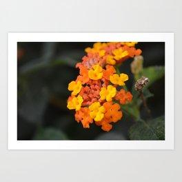Orange and Yellow Art Print