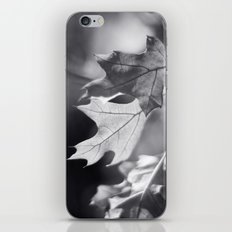 Winter Oak in Black and White iPhone & iPod Skin