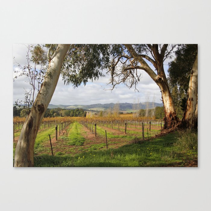 Barossa Valley Autumn Canvas Print