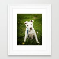 pit bull Framed Art Prints featuring Pit Bull Puppy by Kaelyn Ryan Photography