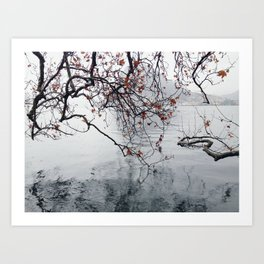 Plane Tree Branches Hanging Over Lake Art Print