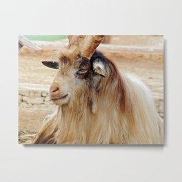 Condescending goat ammotragus lervia Metal Print