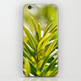 Yew Tree - New Growth iPhone Skin
