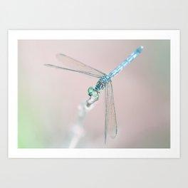Dragonfly_02 Art Print