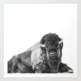 Bison Smile Photography | Black and White | Nature | Animal | Mammal | Minimalism Art Print