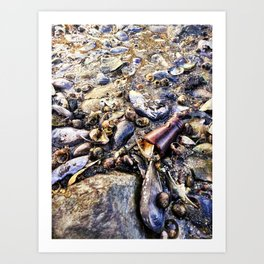 Bottom of the Sea at Low Tide in Casco Bay (1) Art Print
