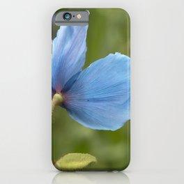Meconopsis Poppy iPhone Case