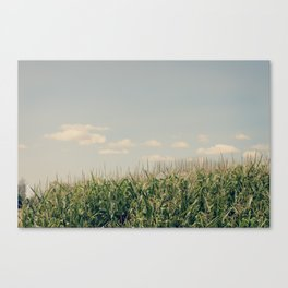 Campos de maíz Canvas Print