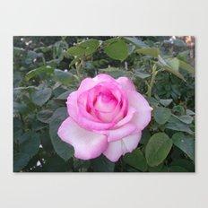 ringling rose Canvas Print