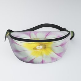 White Dwarf Morning Glory Convolvolus tricolor Fanny Pack