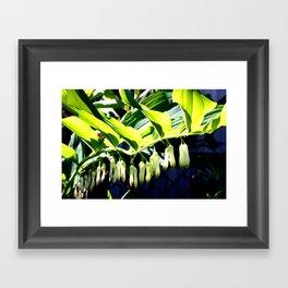 Playful Light Framed Art Print