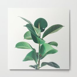 Rubber Fig Metal Print