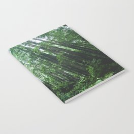 Redwood National Park- Pacific Northwest Nature Photography Notebook