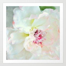 White waterflower Art Print