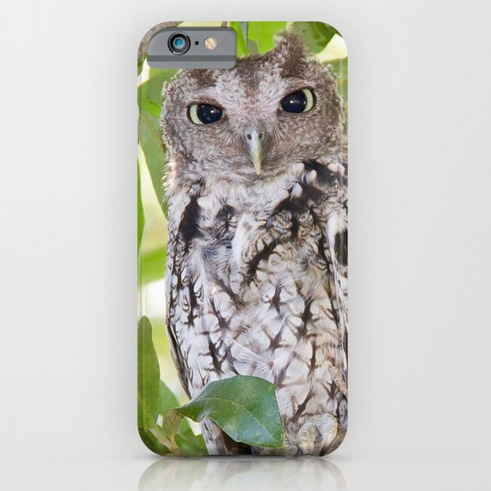 Screech Owl iPhone & iPod Case