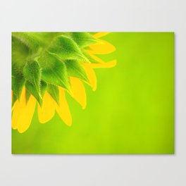 colorful sunflower Canvas Print
