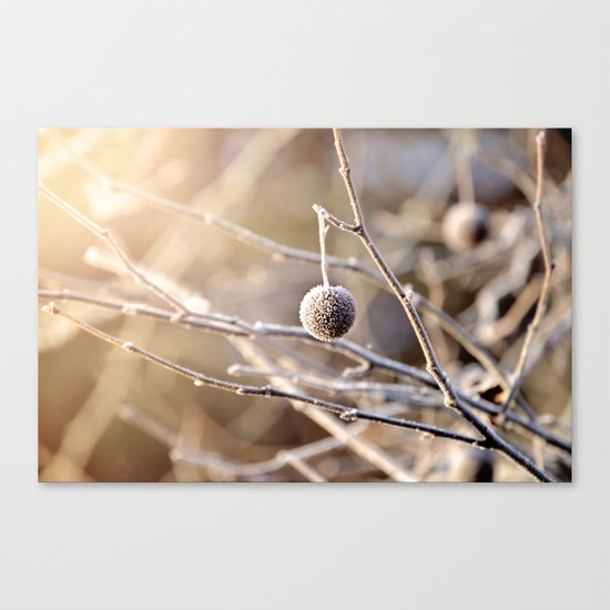 Hanging by a Thread Canvas Print
