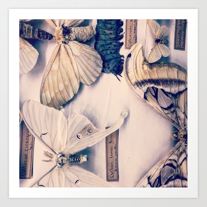 A Mé·lange of Butterflies Art Print
